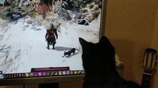 Кошка за монитором