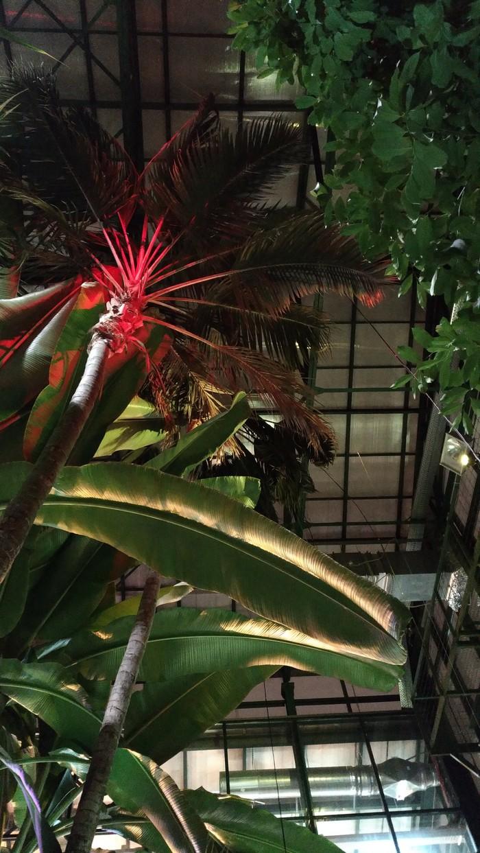 Куда сходить зимой в Москве... Ботанический сад мгу, Аптекарский огород, Тропики, Активный отдых, Кактус, Пальмы, Москва, Длиннопост