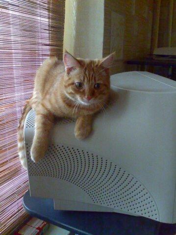 Вот раньше были мониторы! Кот, Монитор, Было-Стало, Вуська и Соня