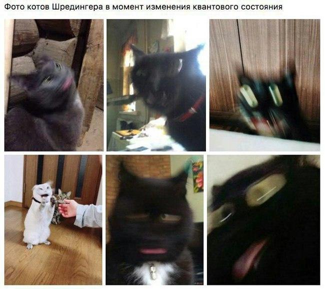 Котики Шредингера