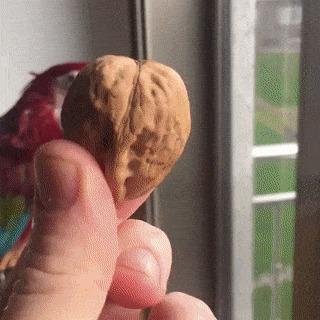 Любитель орешков