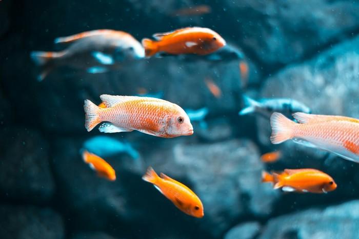 Немного фотографий из океанариума. Рыба, Океанариум, Длиннопост