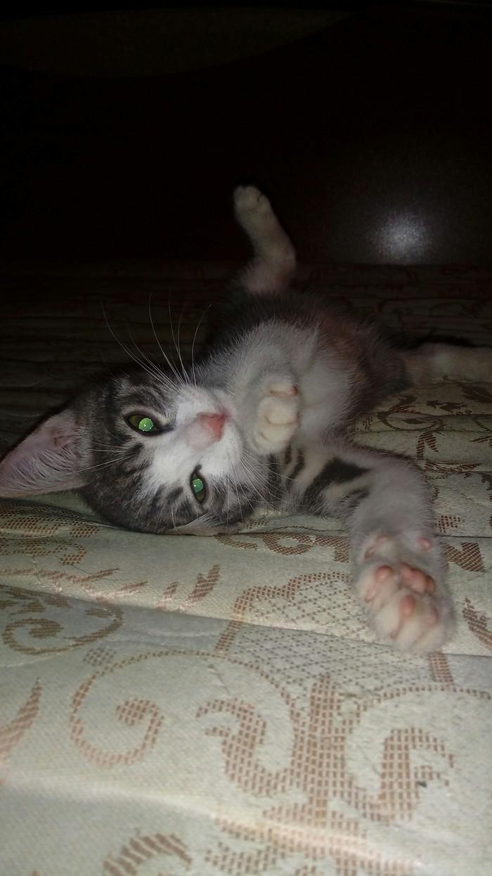 Как Кузьма меня нашел Моё, Длиннопост, Первый пост, Любовь с первого взгляда, Кот
