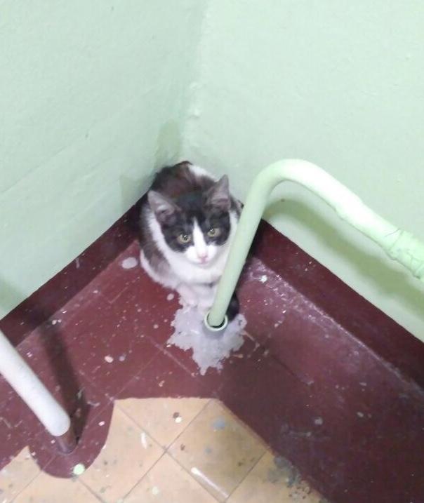 Москва, котёнок ищет дом! Кот, Ищу хозяина, Длиннопост, В добрые руки