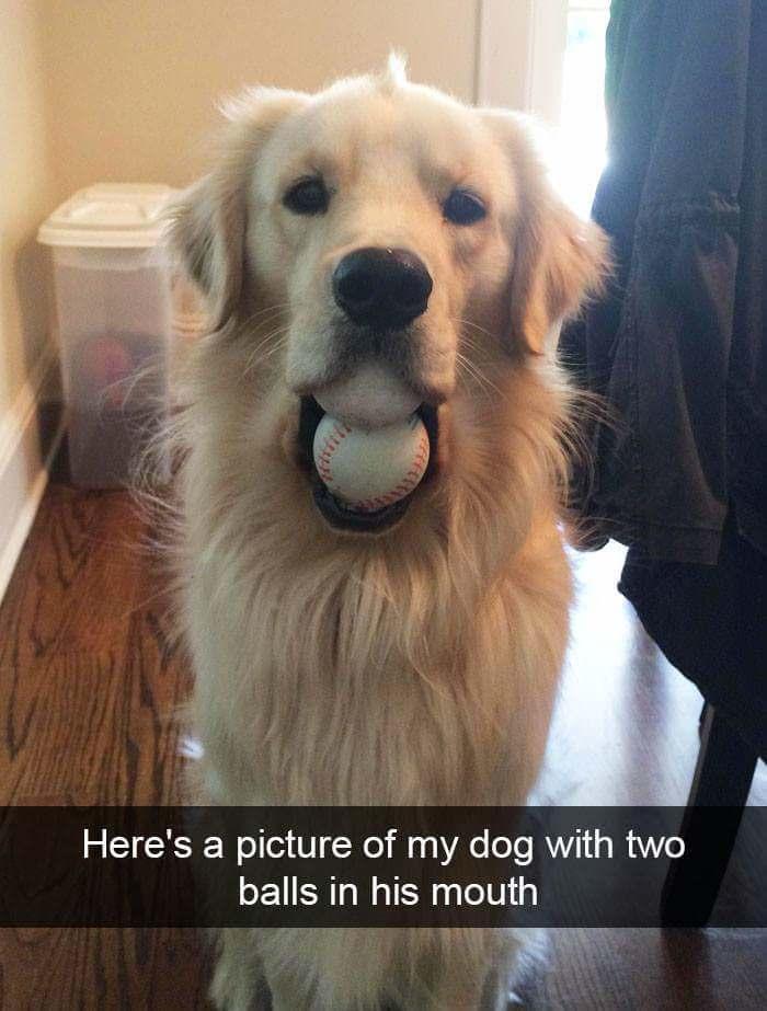 """""""Вот вам фото моего пса с двумя мячиками в пасти"""""""
