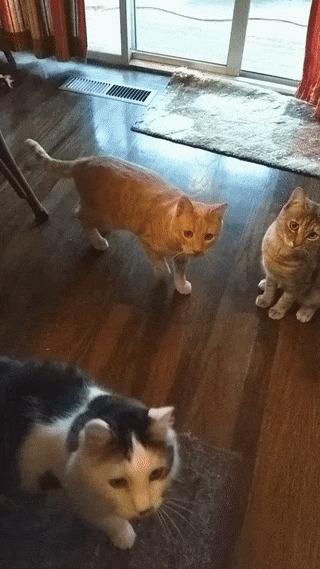 Кто поймал - тот и съел