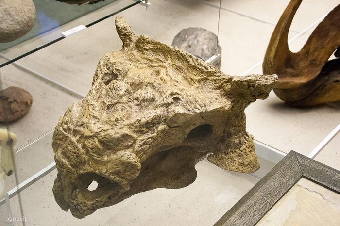 Фотоподборка из Дарвиновского музея в Москве. Часть вторая палеонтология, фотография, длиннопост, Музей Дарвина