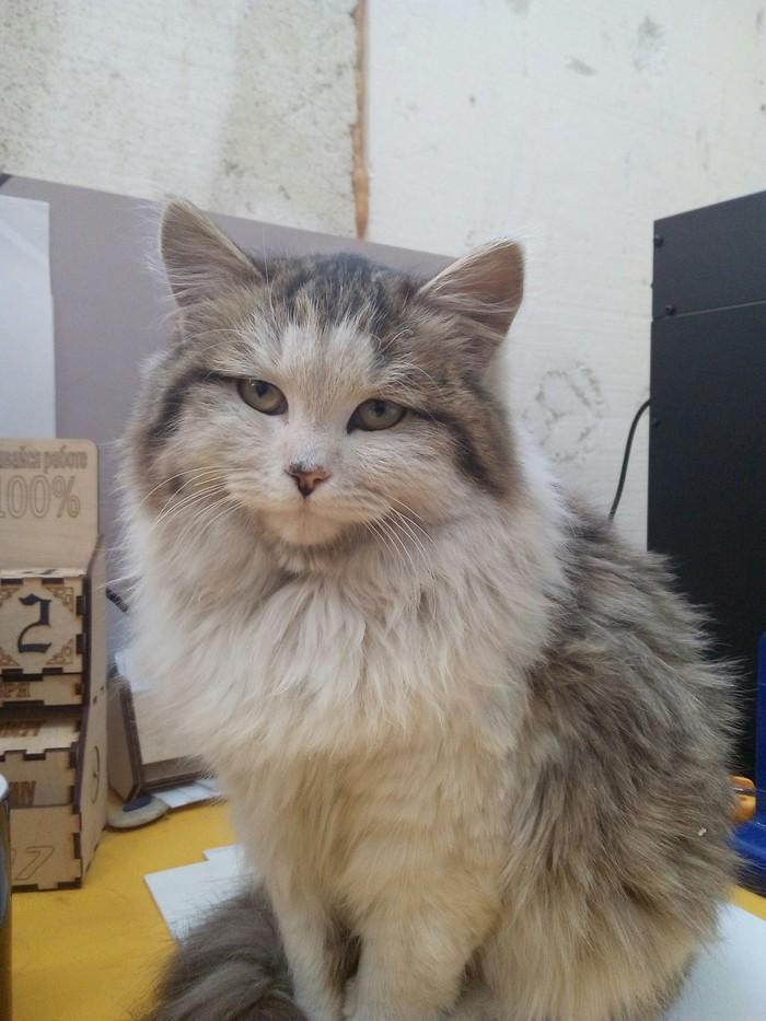 Сегодня спросил у своей кошки, как у неё дела Кот, Взгляд, Длиннопост