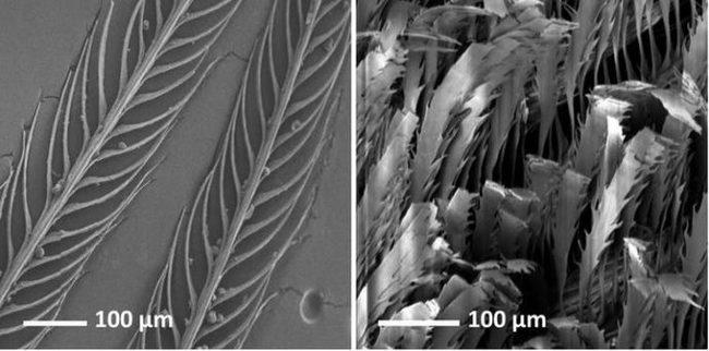Учёные обнаружили невероятную птицу-дыру, полностью поглощающую свет! Птицы, Удивительное, Длиннопост