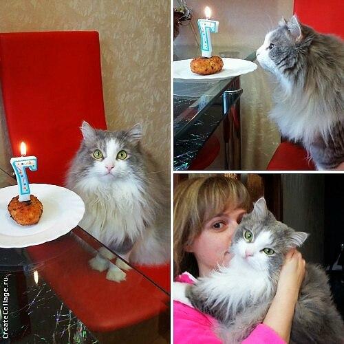 День рождения кота Кот, День рождения, Моё, Волжский