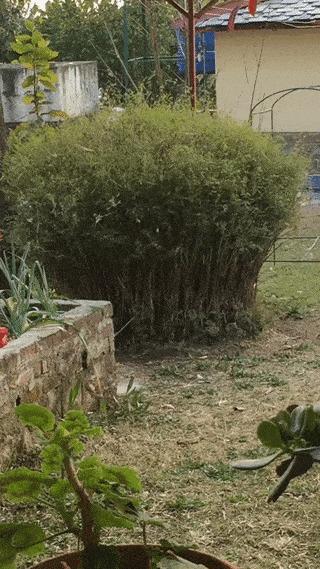 Самый лучший садовник.
