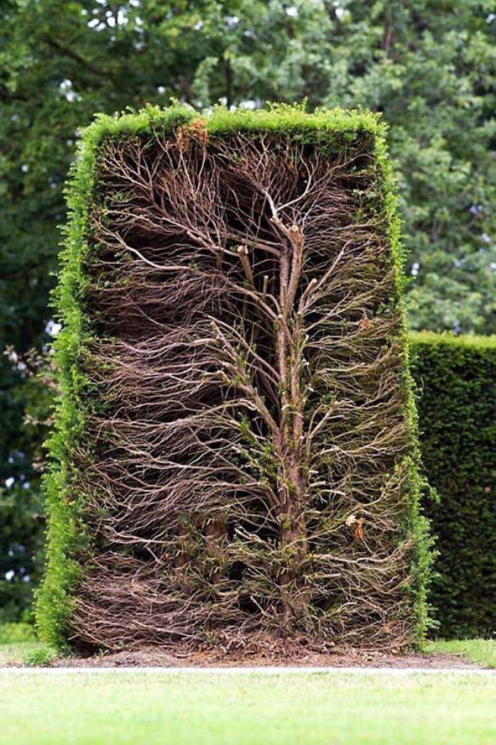 Поперечное сечение изгороди