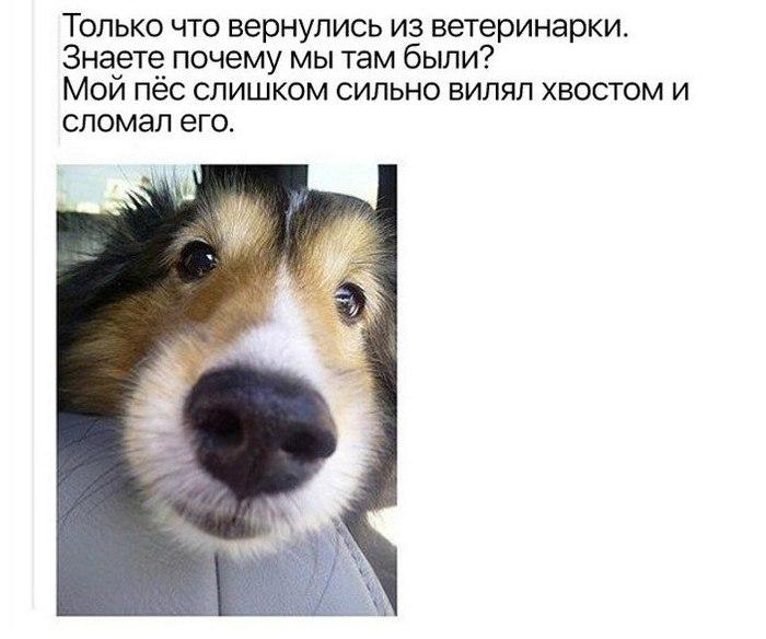 Собаки они такие собака, юмор, картинка с текстом