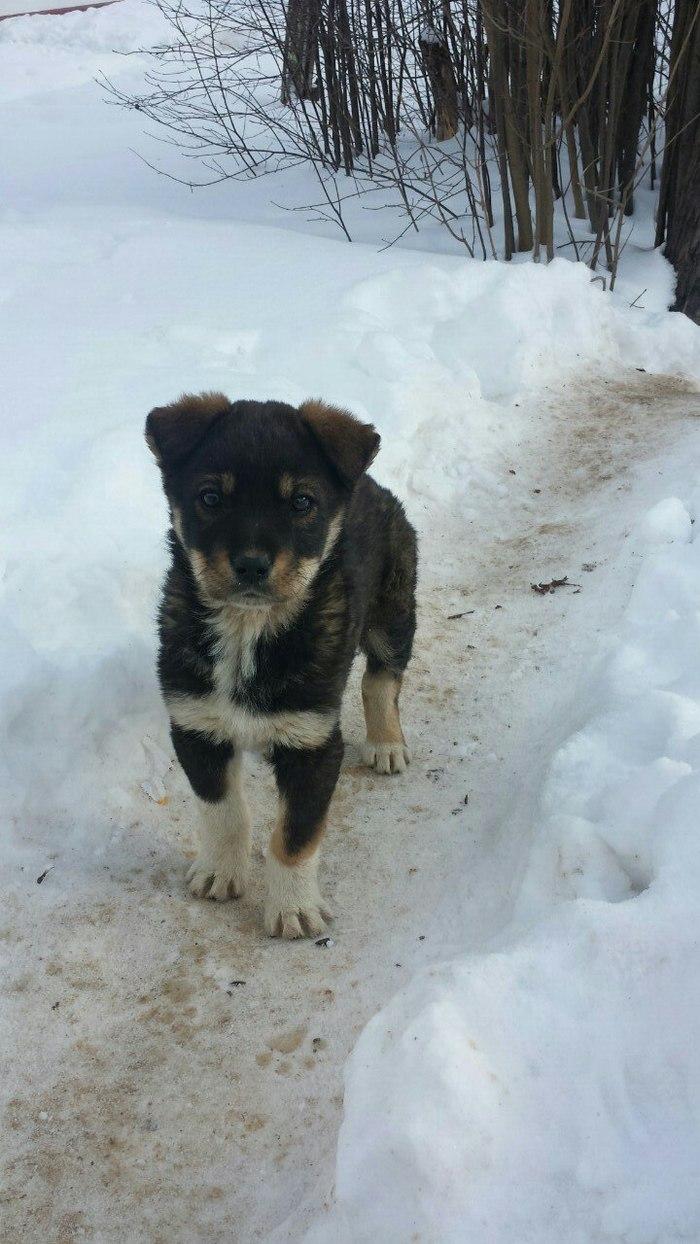 Дом для щенков Собака, Помощь животным, Помощь, Кондрово, Калужская область, В добрые руки, Длиннопост, Без рейтинга