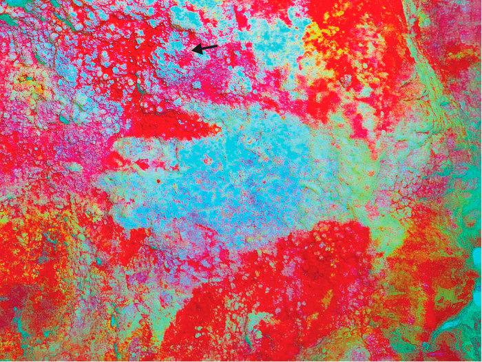 Неандертальский креатив Антропогенез, Станислав Дробышевский, Творчество, Неандерталец, Наука, Длиннопост
