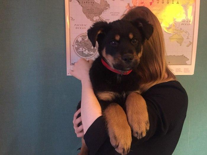 Помогите, пожалуйста, малышу найти дом Москва, Собака, В добрые руки, Длиннопост, Помощь, Без рейтинга