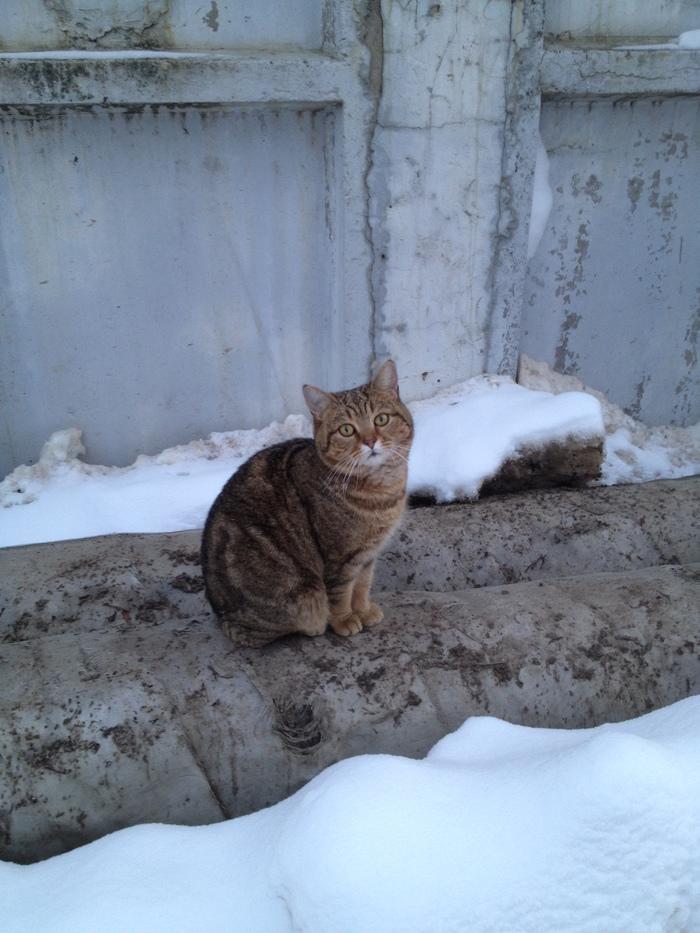 С днём котейки