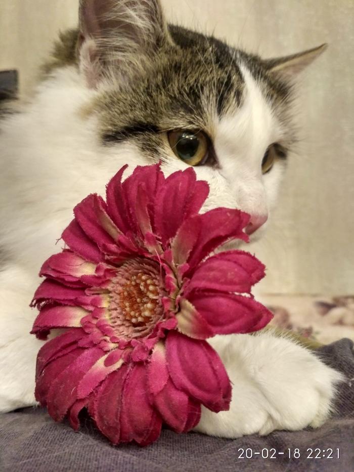 С днем кошек! День кошек, Красавица, Кот