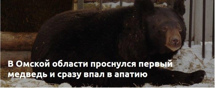 Рифмую, как могу-2 Рифма, Вижу рифму, Медведь, Безразличие, Весна
