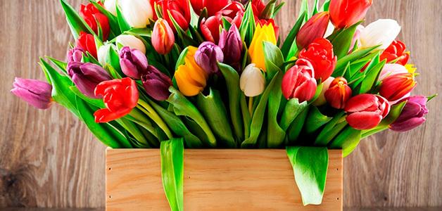 Почему я не люблю, и не понимаю праздники. 8 марта, 23 февраля, Праздники, Подарок