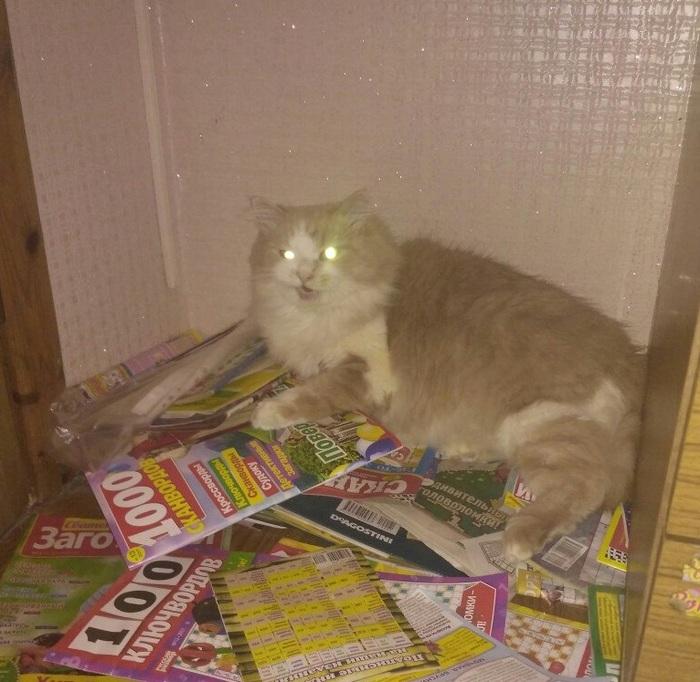Просто соседский кот зашел Кот, Наглость, Фотография, Прикол, Юмор, Незванные гости