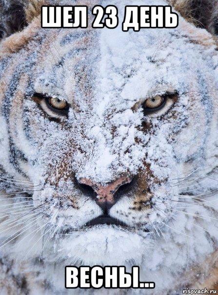 Весна запаздывает Снег, Весна, Юмор, Тигр