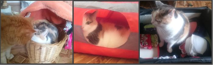 Котокомикс-3: Коробочный Кот, Коробка, Захват, Вуська и Соня, Длиннопост