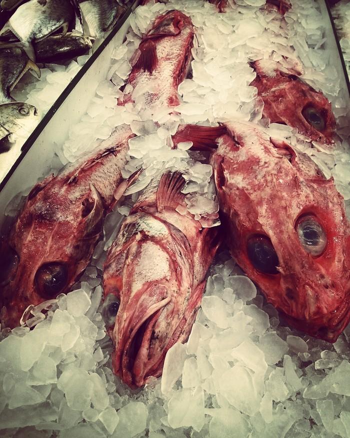 Рыба-кто? Странности, Фотография, Рыба, Магазин, США