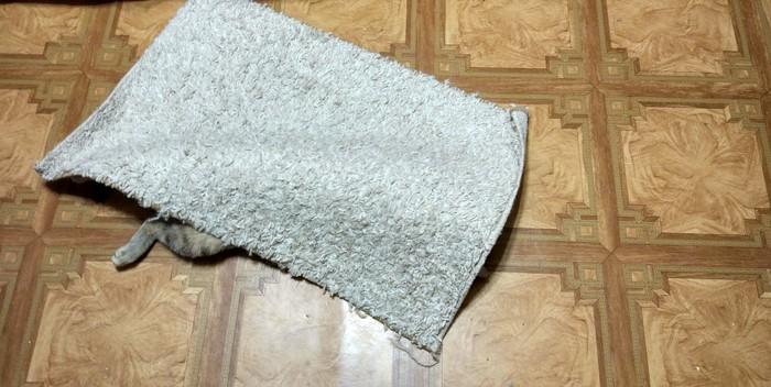Есть два способа прикинуться ковриком Кот, Нужно больше котиков