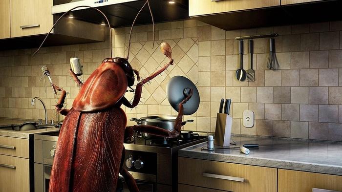 Коротко о протеине из насекомых Спорт, Тренер, Спортивные советы, Протеины, Исследование, Мышцы, Качалка, Здоровье, Длиннопост