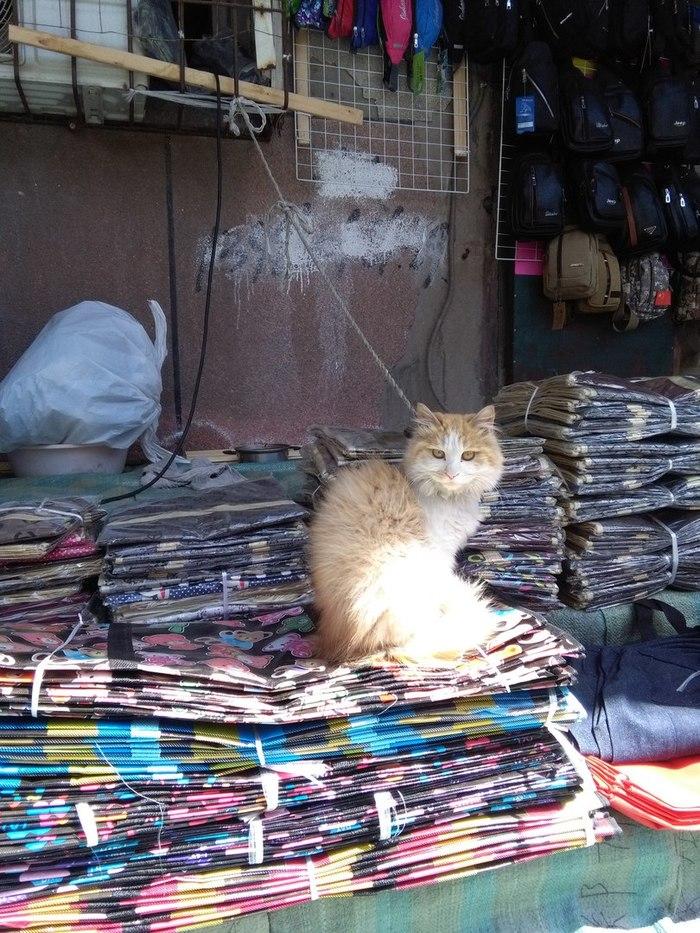 Про сторожевых собак я слышал, но чтобы сторожевые коты... Кот, Сторож, Длиннопост