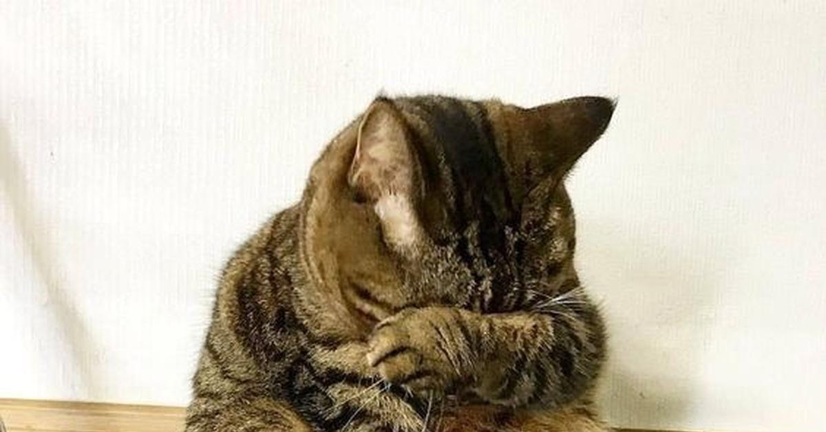 обиженный котик картинки смешные