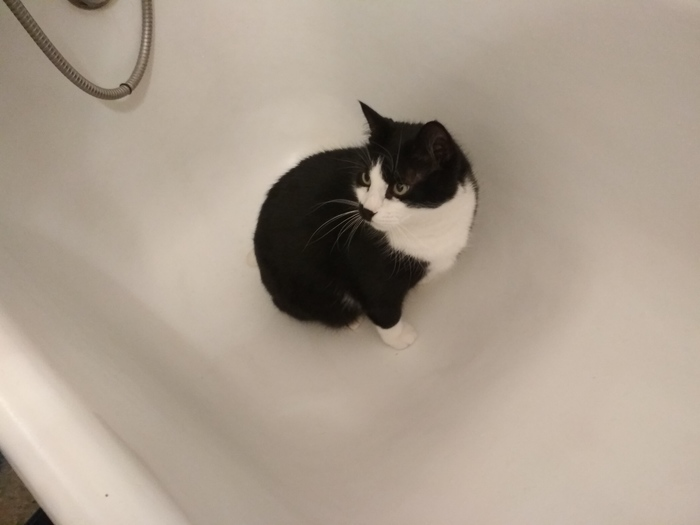 Кот. Эй, кот. Привет. Кот, Фотография, Привет, Длиннопост