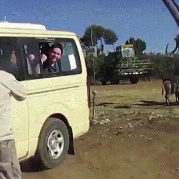 Веселое сафари