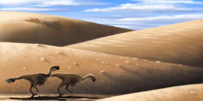 Khaan - овираптор из Монголии Интересное, Познавательно, Длиннопост, Доисторические животные, Динозавры, Мел, Палеонтология