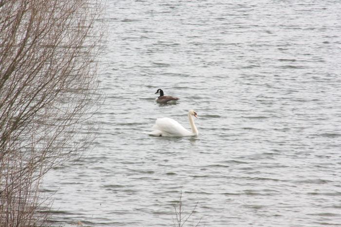 Небольшое немецкое озеро-заповедник