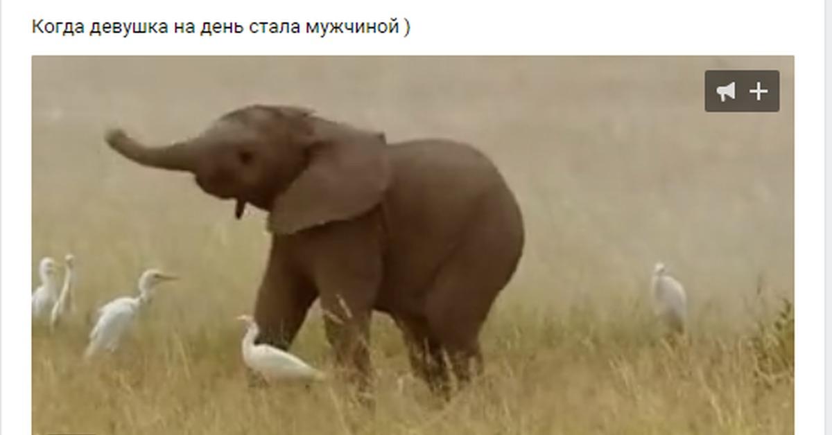 Гифка слоник машет хоботом, люди меняются картинки