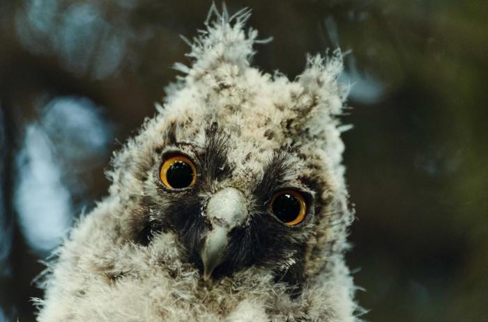 Ежегодная информация про слётков Слеток, Птицы, Челябинский зоопарк, Природа, Длиннопост