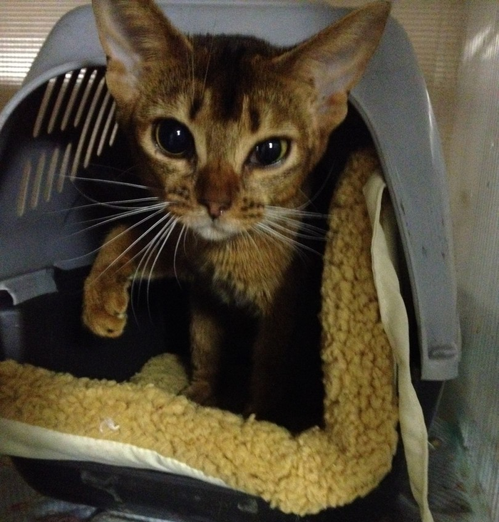 Кошка в карцере