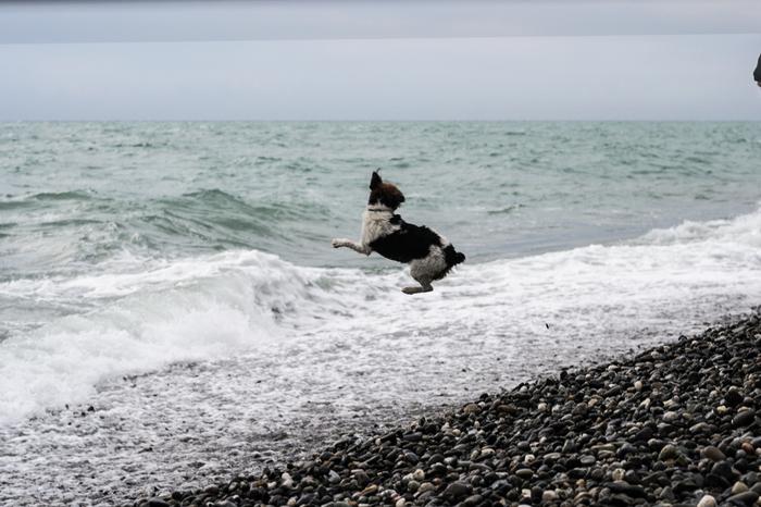 Из прогулок по пляжу Фотография, Сочи, Адлер, Пляж, Набережная, Начинающий фотограф, Лига фотографов, Длиннопост