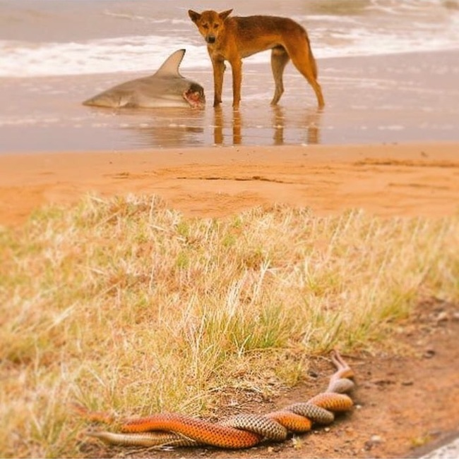 Еще немножечко Австралии Австралия, Природа, 9gag