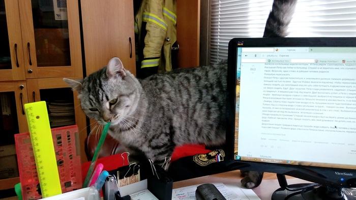 Масяня пожарная День Пожарной охраны, Кошка Масяня, Кот