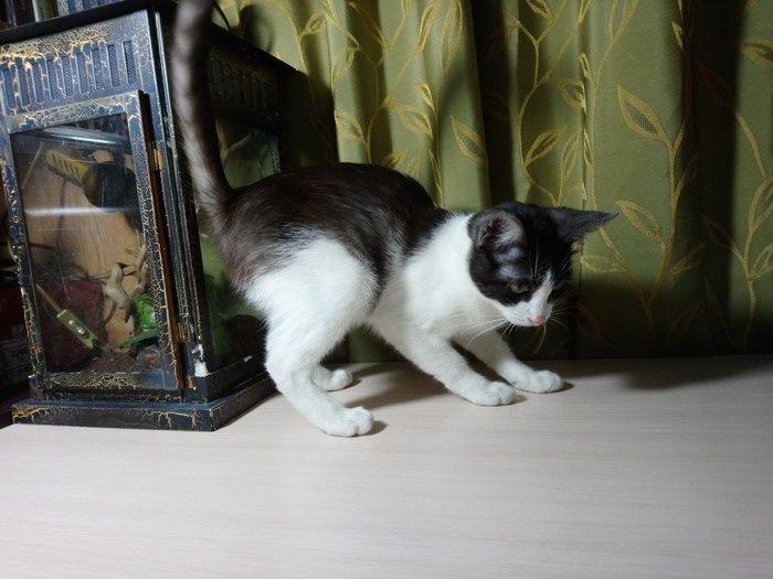 Москва! Ребенок ищет дом! Кот, Длиннопост, Помощь, Без рейтинга, Москва, В добрые руки, Помощь животным