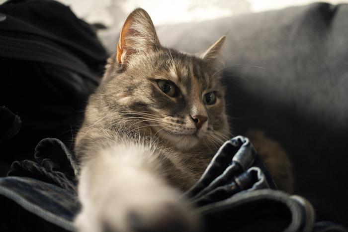 Моя красавица - кошка Кот, Питомец, Домашние животные, Плюша, Спасение животных, Длиннопост