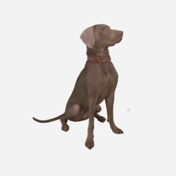 Веймаранер в 3D Собака, 3D сканер, Веймаранер, 3D, Рендер, Гифка, Длиннопост