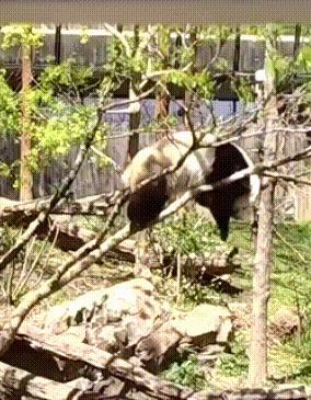 Когда ты панда )