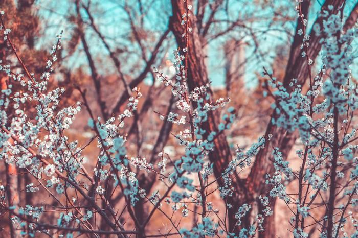 Цветения Фотография, Цветение, Sony, Длиннопост