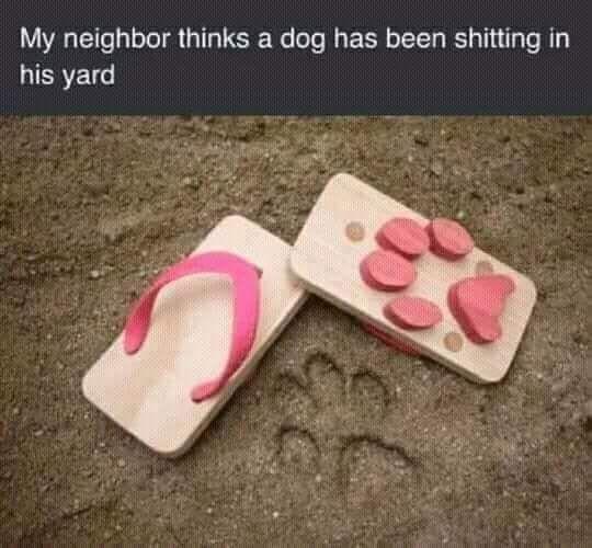Соседи думают, что им срёт на газон какой-то пёс