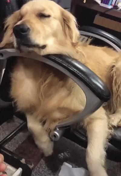 Что тебе снится, пёс?