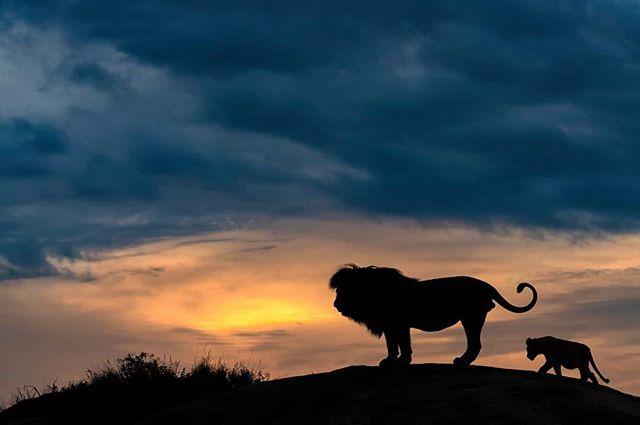 Лев со львёнком на скале смотрят на закат. Серенгети, Танзания